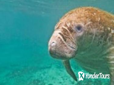 Private Tour: Custom Snorkeling Tour with Manatee Swim