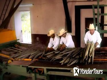 Private Tour: Sotuta de Peon Hacieda Day Trip