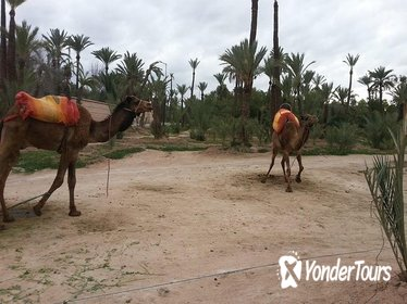 Quad Biking Adventure with Camel Ride