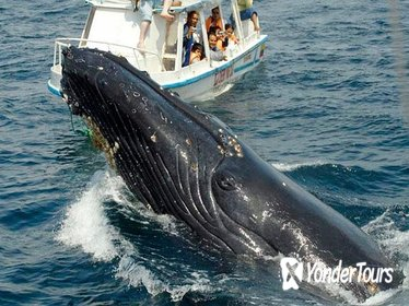 Samaná Peninsula Whale-Watching Tour from Punta Cana