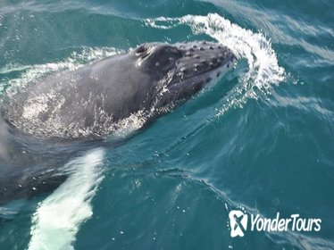 Samaná Whale Watching Excursion and Cayo Levantado Adventure from Punta Cana