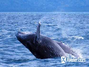 Samana Whale Watching from Punta Cana