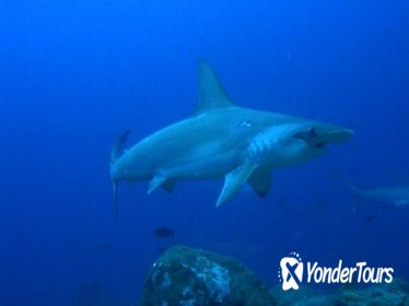 Scuba Diving at Kicker Rock for Certified Divers