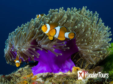 Scuba Diving Day Trip to Racha Yai from Phuket
