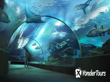 SEA LIFE Bangkok Ocean World Admission with Private Transfer