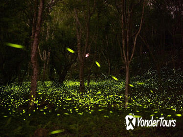 Self-Guided Tour With Private Transfer: Be Around With Fireflies And Tung Blossom
