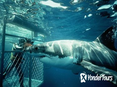 Shark Diving Private Day Tour to Gansbaai from Cape Town