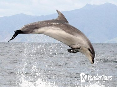 Ship Cove and Dolphin Eco-Tour Cruise