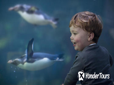 Skip the Line: Two Oceans Aquarium Admission Ticket