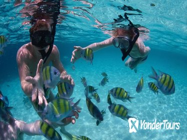 Snorkeling Tour at Land's End in Cabo San Lucas