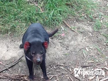 South East Food, Sightseeing Private Tour with the Tasmanian Devil Unzoo