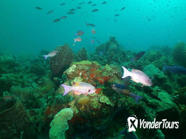 St Lucia Beginner Scuba Diving Tour