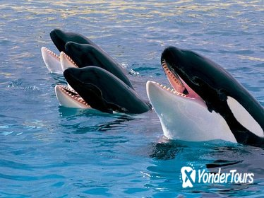 Teide National Park Tour and Loro Parque Ticket