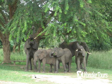 The 3 day Murchison Falls National Park safari andTour