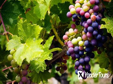 The Grape Escape Small Group Winery Tour 4.5hrs - From Limassol