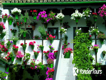 Tour and tickets: Authentic Patios of Cordoba