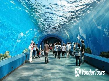 Underwater World Pattaya General Admission with Hotel Transfers