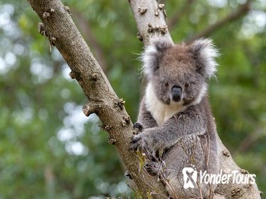 VIP Australian Native Experience at Adelaide Zoo