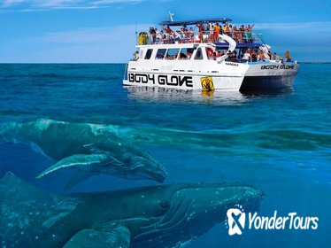 Whale Watch Excursion from the Big Island