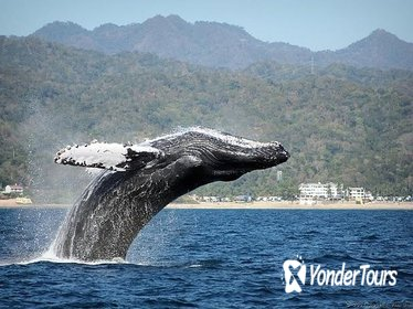 Whale Watching Day Trip From Punta Cana