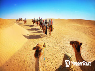 Desert Experience: Camel Safari with Dinner and Emirati Activities from Dubai