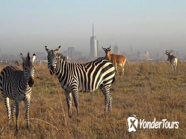 Half-Day Nairobi National Park Tour from Nairobi