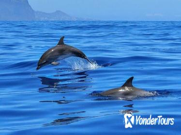 Sunset Speedboat Tour and Dolphin Sighting from Phuket