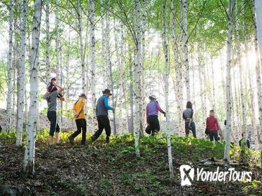 Full-Day Wondae-ri Birch Forest and Nami Island Hike from Seoul