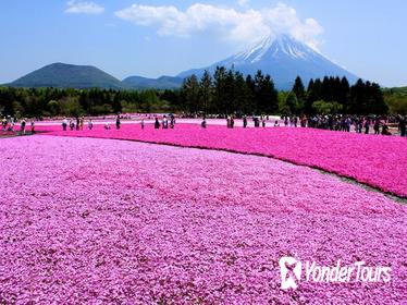 Pink Moss Phlox Festival,Mt Fuji 5th Station and Strawberry Picking from Tokyo