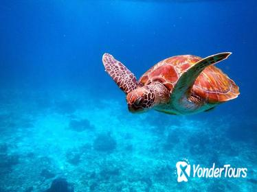 Early Bird Similan Islands Snorkel Tour by Siam Adventure World from Phuket