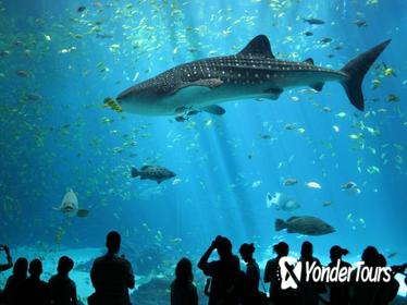 Bangkok SEA LIFE Ocean World Admisison Ticket