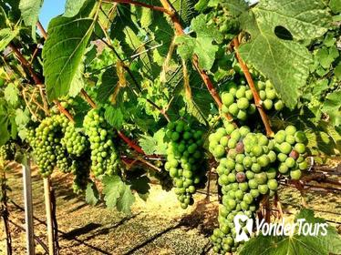 Khao Yai Winery - Vineyard Tours & Animal Lover with Horse Farm from Bangkok