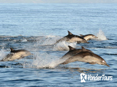 Port Stephens Day Tour with Dolphin Watching, Sandboarding, and Australian Wildlife