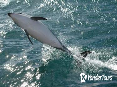 Kaikoura Whale and Dolphin Overnight Tour from Christchurch