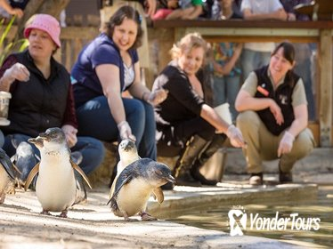 Adelaide Zoo Behind the Scenes Experience: Penguins in Person