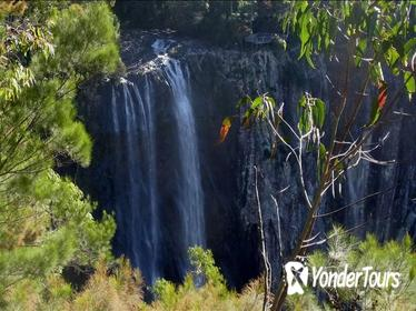 Byron Bay Hinterland Tour Including Rainforest Walk to Minyon Falls