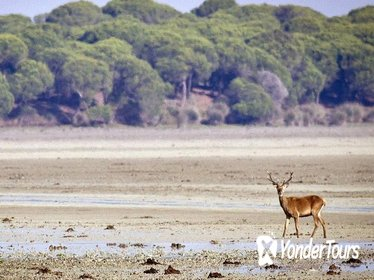 Private Day Trip from Cádiz: Doñana National Park & Sanlucar