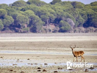 Private Day Trip from Seville: Doñana National Park & Sanlucar