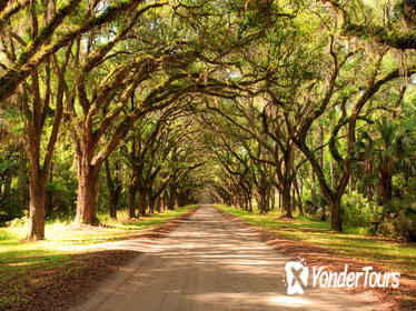 New Orleans Super Saver: Swamp and Bayou Sightseeing plus Oak Alley Plantation