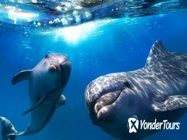 Hawaii Combo: Wild Dolphin Swim and Kealakekua Bay Snorkeling