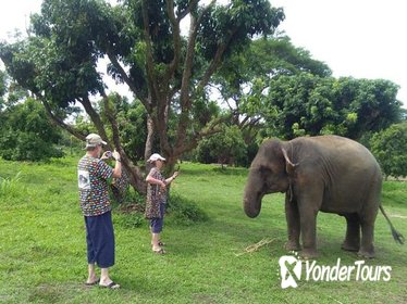 Half Day Visit Elephant Sanctuary in Chiang Mai