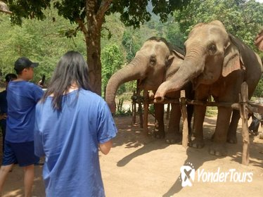 Elephant Sanctuary, Trekking and White Water Rafting in Chiang Mai